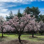 «У нас тепло и цветет миндаль»: в Италии надеются, что новый премьер-министр откроет границы для туристов