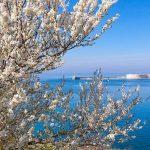 Туристов в Севастополе 8 Марта не будут утомлять коронавирусными ограничениями