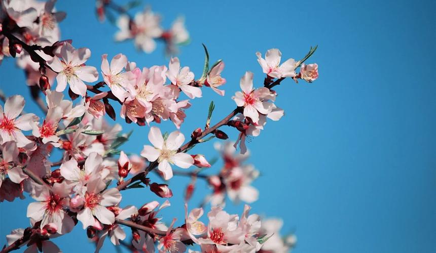 Минтруд предложил увеличить период майских праздников