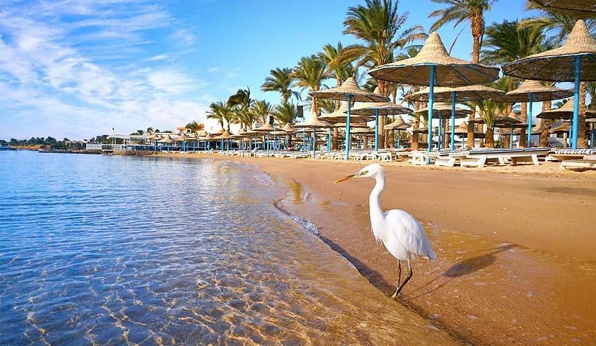 Возобновление рейсов на курорты Египта позволит снизить цены на туры