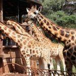 В Кении заявили о готовности открыть страну для российских туристов