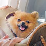 «Аэрофлот» внесет изменения в политику провоза животных на борту