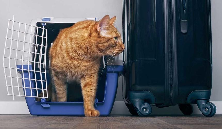 Авиакомпания «Аэрофлот» меняет правила перевозки животных