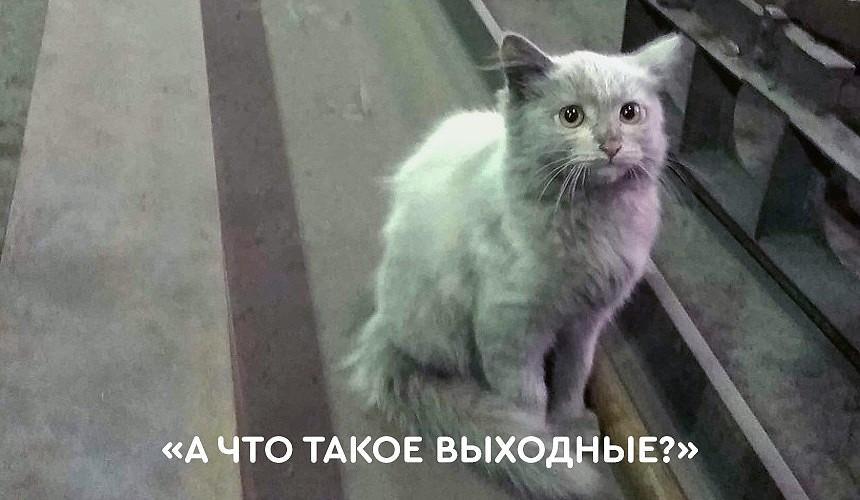 «А что такое выходные?» В туристических компаниях Москвы ответили на вопрос про нерабочие дни