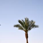 Росавиация объяснила невыдачу допусков на рейсы в Шарм-эль-Шейх и Хургаду