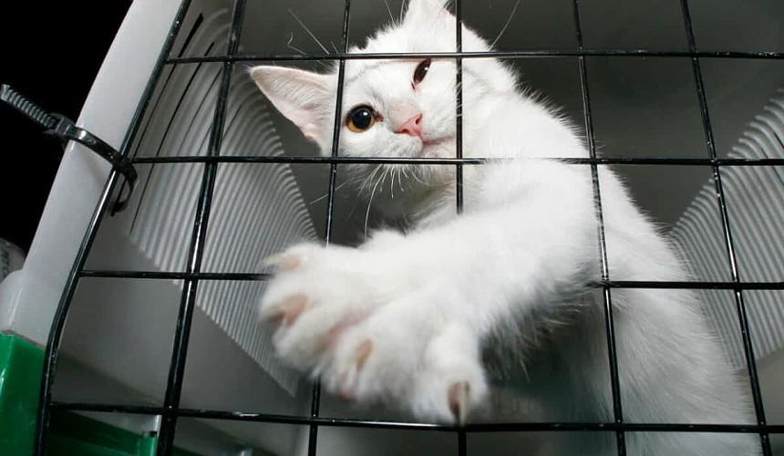 «Аэрофлот» объявил о начислении миль за перевозку животных