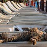 Туроператоры о ситуации на российских курортах: «Спрос упал»