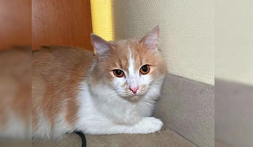 Кот в аэропорту Екатеринбурга остался один на улице после отказа ему в полете