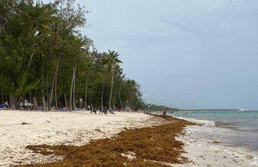 Водоросли в Доминикане: справляются ли отели с ежегодным нашествием «зеленых»