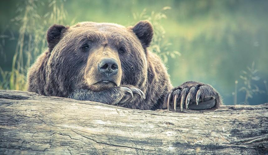 Туристам посоветовали не ночевать в природном парке после нападения медведей